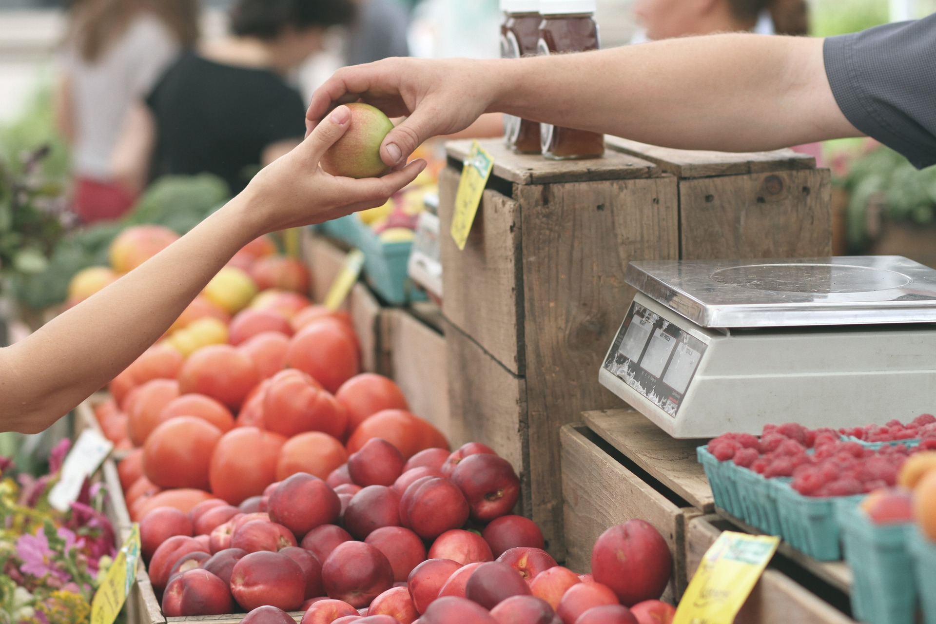 A Summer Sunday at the Squirrel Hill Farmers' Market